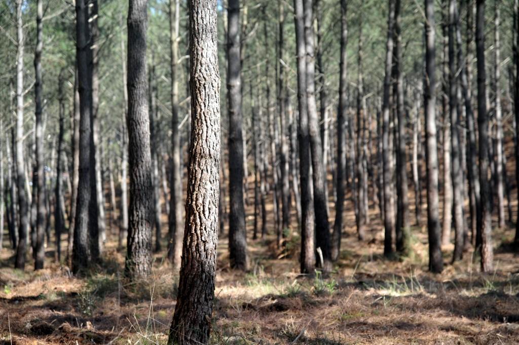 forêt seignosse