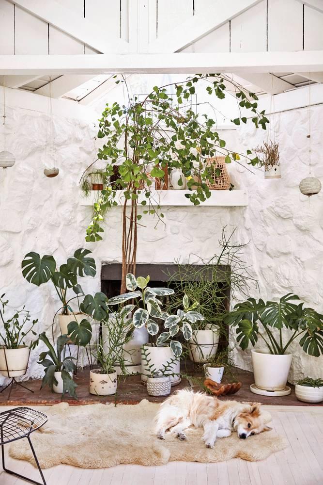 déco-plantes-d'-intérieur