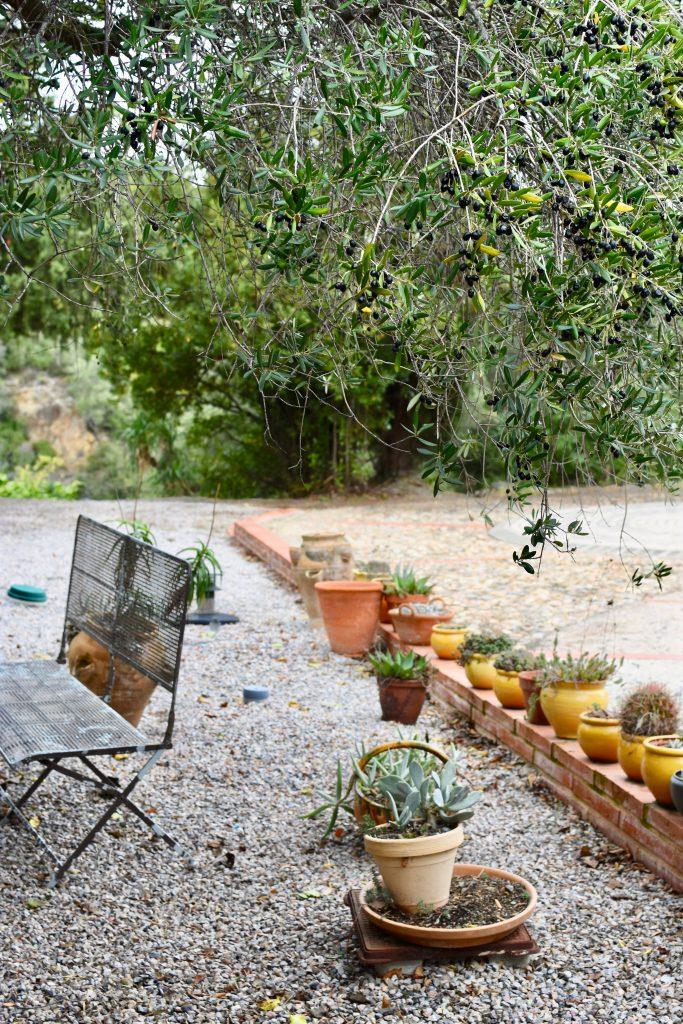 jardin-méditaranéen