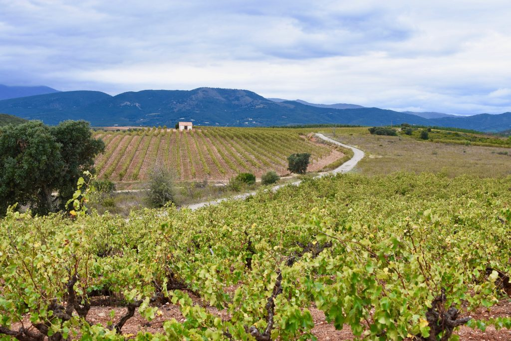 paysage-vignes